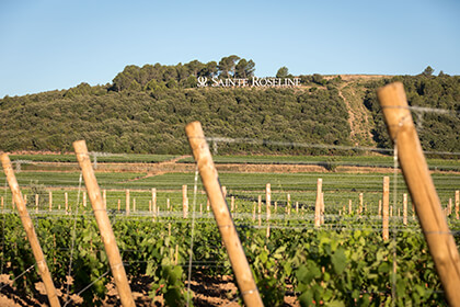 Vignoble du château Sainte Roseline Cru Classé de Provence