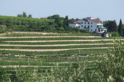 Giuseppe Quintarelli vineyard