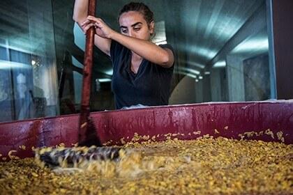 Arianna Occhipinti, natural wines, Winemaking at Occhipinti