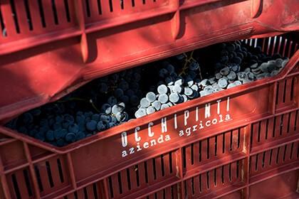 Occhipinti, natural wines, Frappato grapes
