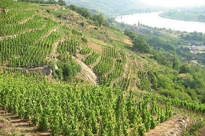 Vue vignoble en terrasses Vallée du Rhône