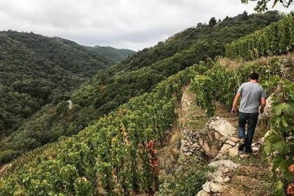 Vignoble en terrasses Vallée du Rhône