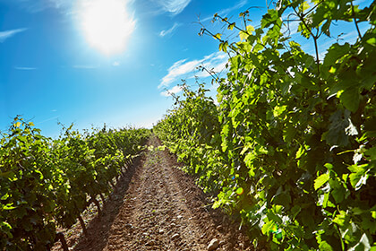 Vue vignoble Vallée du Rhône