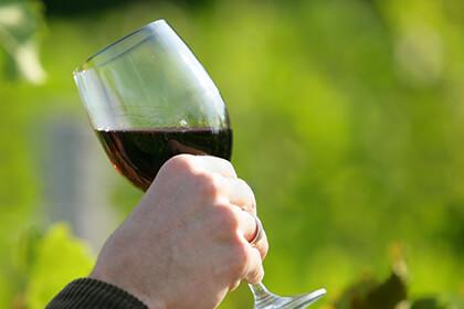 Dégustation des vins de la Vallée du Rhône