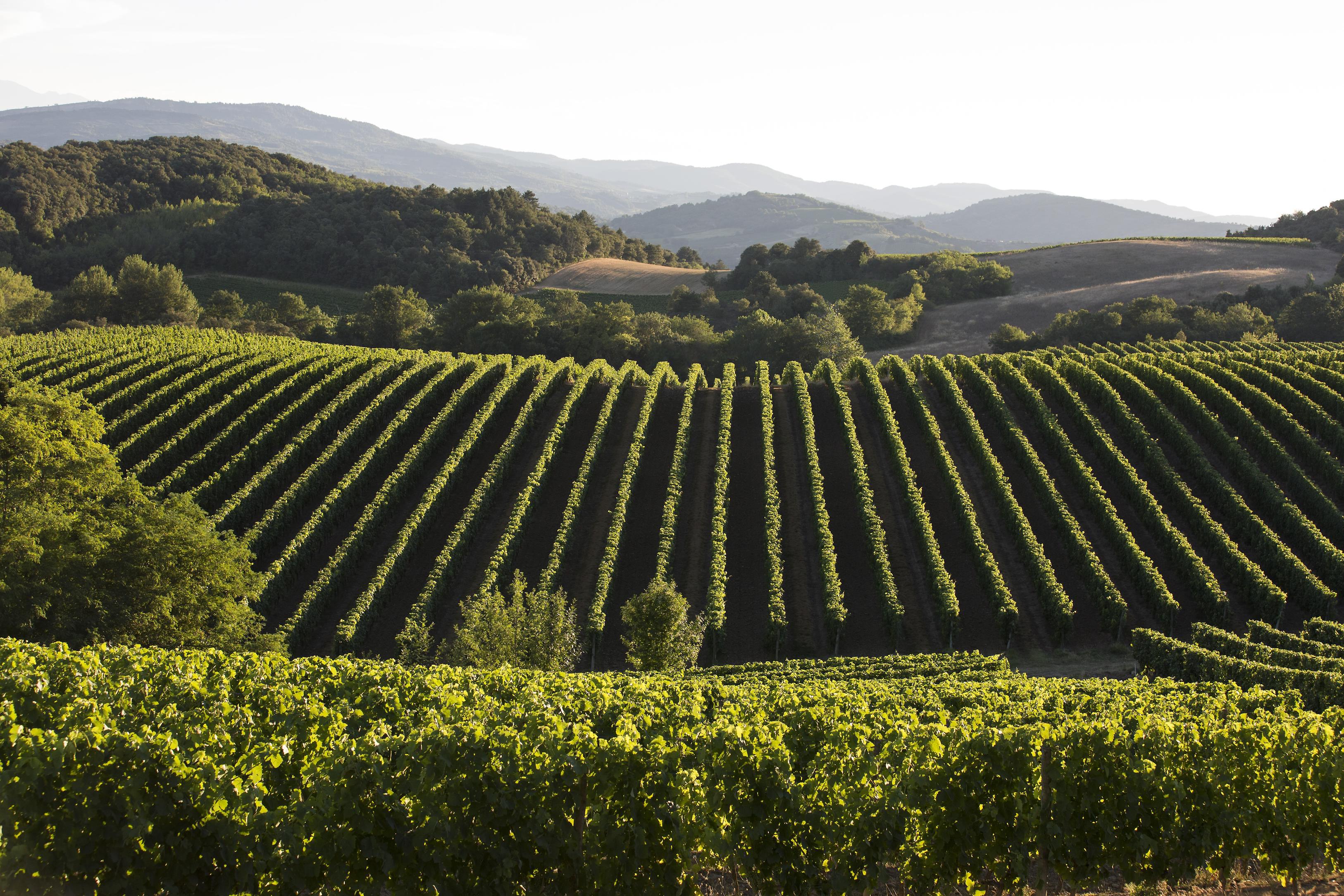 Vue du vignoble Languedoc