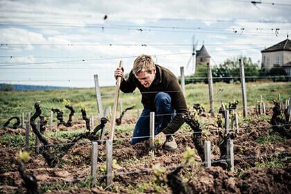 Travail de la vigne Moulin-À-Vent