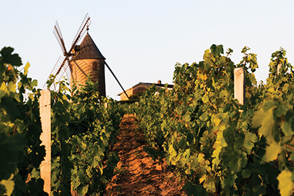 Moulin-À-Vent - Vignoble - Beaujolais