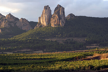Vignobles Rioja Espagne