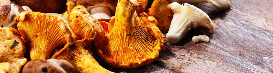 champignons-crus-vin